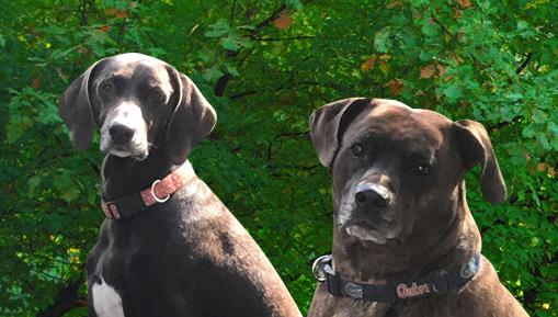 Dogs Willie & Gauge